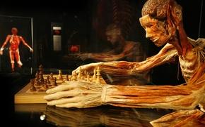 Картинка шахматы, Гюнтер фон Хагенс, Gunther von Hagens, пластинация, шахматист