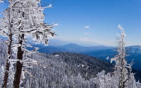 Обои Горы, лес, зима