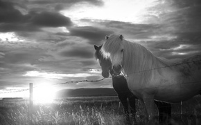 Картинка grass, fireball, twilight, field, sunset, mountains, clouds, sun, fence, horses, dusk, wire, countryside, farmland, countryside …
