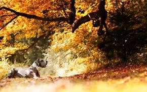 Обои осень, друг, собака