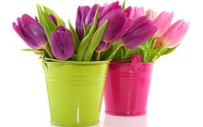 Обои цветы, тюльпаны, горшки, ведра