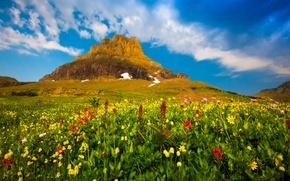 Обои гора, долина, цветы, растения, небо