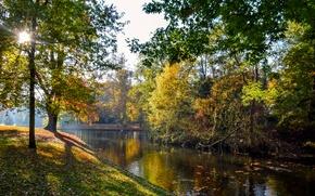 Картинка осень, листья, солнце, деревья, пруд, парк, Нидерланды, Vught, Reeburgpark