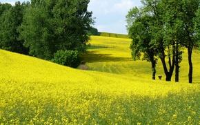 Картинка поле, деревья, цветы, весна, Nature, цветение, trees, field, жёлтые, spring, yellow flowers