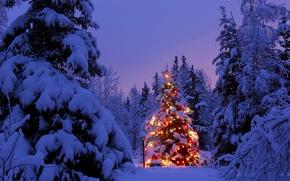Обои огни, елка, новый год, снег, лес