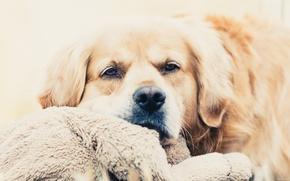 Картинка Собака, грустно, приуныл