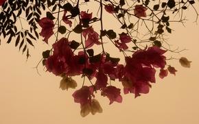 Картинка цветок, листья, цветы, widescreen, обои, wallpaper, широкоформатные, background, обои на рабочий стол, полноэкранные, HD wallpapers, …