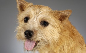 Картинка морда, портрет, собака