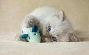 Картинка кошка, котенок, фон, игрушка, игра, пушистый, мышь, мышка, милый, лежит, прелесть, мордашка, голубоглазый, рэгдолл
