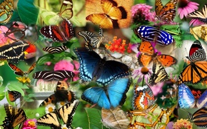 Обои бабочка, насекомое, коллаж, мотылек