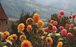 Картинка лето, цветы, горы, оранжевый, желтый, розовый