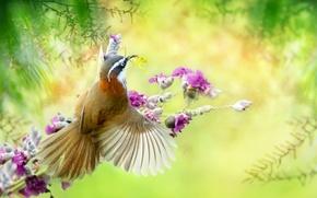 Обои цветы, насекомое, природа, птица, богомол, ветки, тропики