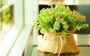 Обои зелень, листья, макро, цветы, растение