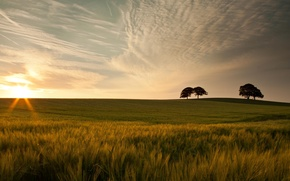 Картинка красота, широкоэкранные, листочки, HD wallpapers, обои, листья, дерево, зелень, полноэкранные, солнце, background, fullscreen, облака, макро, ...