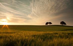Картинка зелень, небо, трава, листья, солнце, облака, макро, деревья, природа, фон, дерево, widescreen, обои, красота, колоски, …