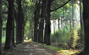 Картинка Spring, Morning, Trees, Path