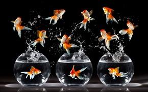 Обои рендеринг, аквариум, золотые, рыбки