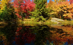 Обои камни, осень, небо, деревья, пруд, лес