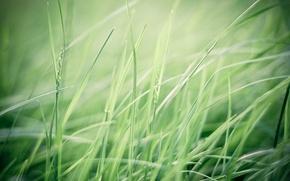 Картинка зелень, поле, трава, макро, природа, ветер, green, растения