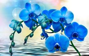 Обои цветы, синие, вода, Орхидеи, фон, блики