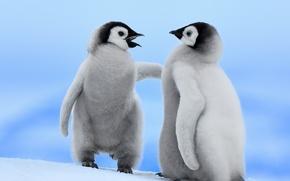 Картинка птицы, пингвины, снег, зима