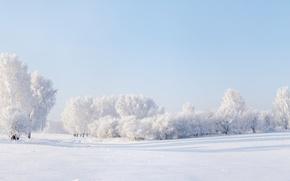Картинка зима, небо, снег, деревья, Панорама