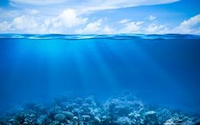 Картинка море, океан, подводный мир, underwater, ocean, fishes, tropical, reef, coral, коралловый риф