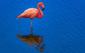 Картинка вода, отражение, птица, рябь, фламинго