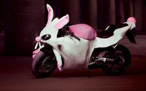 Обои юмор, кролик, мотоцикл, Костюм