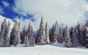 Обои зима, елки, ёлки, природа, снег, небо
