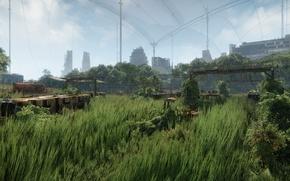 Картинка трава, графика, Crysis 3, самопал, New York v2.0