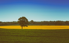 Картинка grass, sky, field, tree