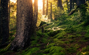 Картинка лес, лето, мох, солнечный свет
