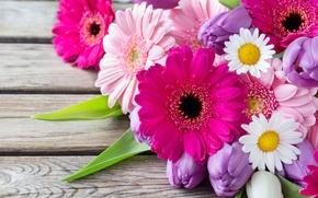 Картинка цветы, ромашки, тюльпаны, герберы