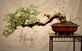 Обои цветы, дерево, япония, бонсай