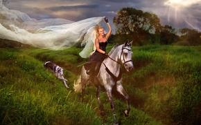 Картинка девушка, лошадь, собака, наездница, вуаль, борзая