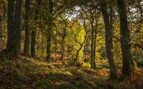 Картинка лес, трава, деревья, Шотландия, Pitlochry