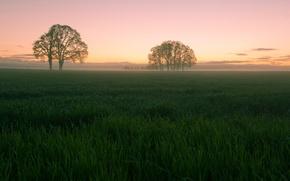 Картинка небо, трава, облака, деревья, закат, поляна, Поле, вечер
