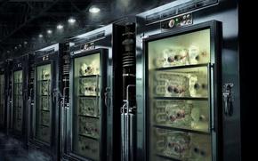 Обои холодильник, склад, 151, органы