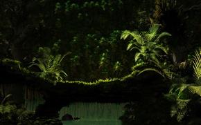 Картинка зелень, вода, природа, дерево, папоротник