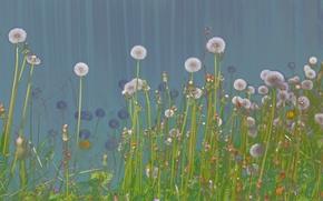 Картинка трава, природа, одуванчики