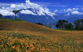 Картинка поле, облака, пейзаж, цветы, горы