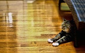 Картинка cat, animal, lazy