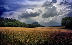 Картинка пшеница, зелень, поле, трава, облака, деревья, пейзаж, тучи, природа, green, растения, долина, колосья, grass, sky, …