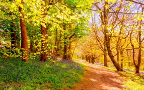Картинка лес, деревья, тропа
