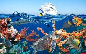 Обои яхта, рыбы, море, вода, кораллы, подводный мир, небо, черепаха