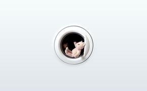 Картинка минимализм, мишка, тедди, люк стиралки