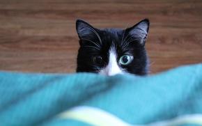 Картинка кошка, животные, кот, фон, widescreen, wallpaper, широкоформатные, background, красивые обои, обои на рабочий стол, полноэкранные, …