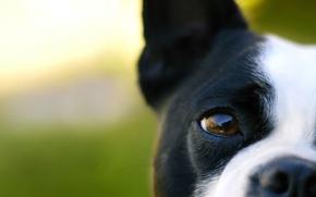 Картинка морда, макро, пес