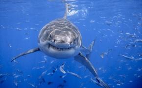 Картинка море, природа, акула